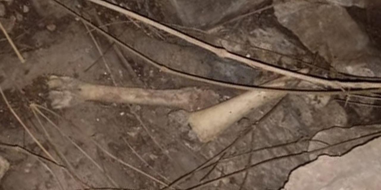Analizan osamentas halladas en cueva de La Mixteca | El Imparcial de Oaxaca