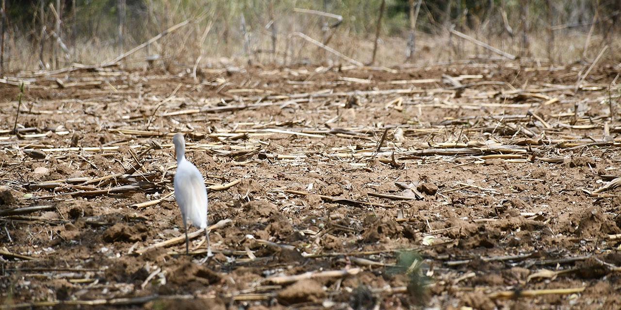 Padecen sequía 103 municipios de Oaxaca   El Imparcial de Oaxaca
