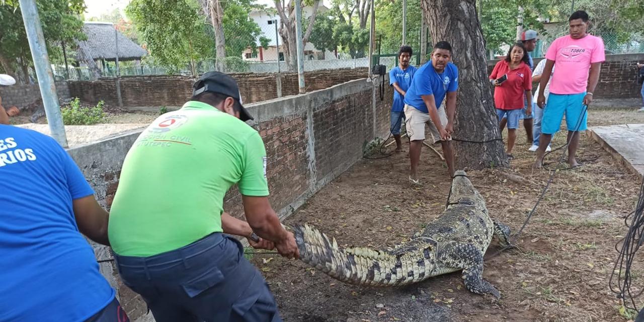 Capacitan sobre captura y reubicación de cocodrilos en la Costa   El Imparcial de Oaxaca