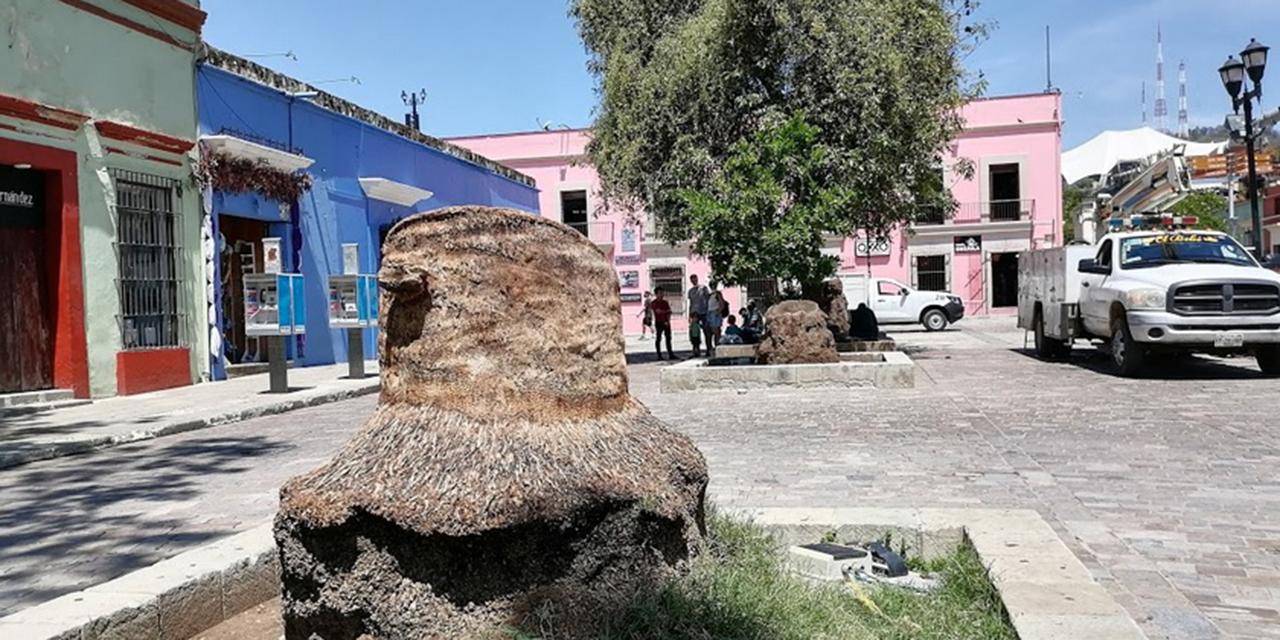 La capital oaxaqueña adolece de un plan ambiental; arbolado urbano en riesgo | El Imparcial de Oaxaca