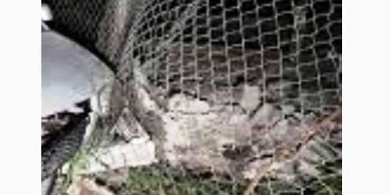 Se impacta en la cerca de una casa | El Imparcial de Oaxaca
