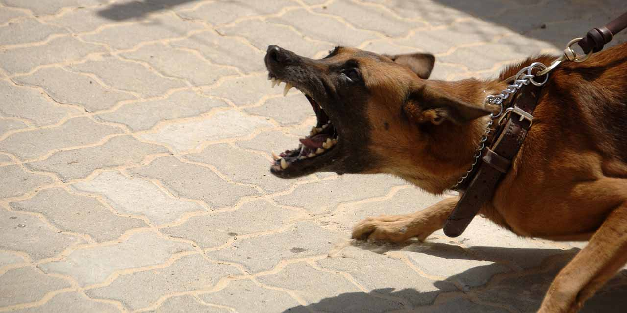 ¿Tu perro esta de malas siempre? quizás sea muy inteligente, según estudio | El Imparcial de Oaxaca