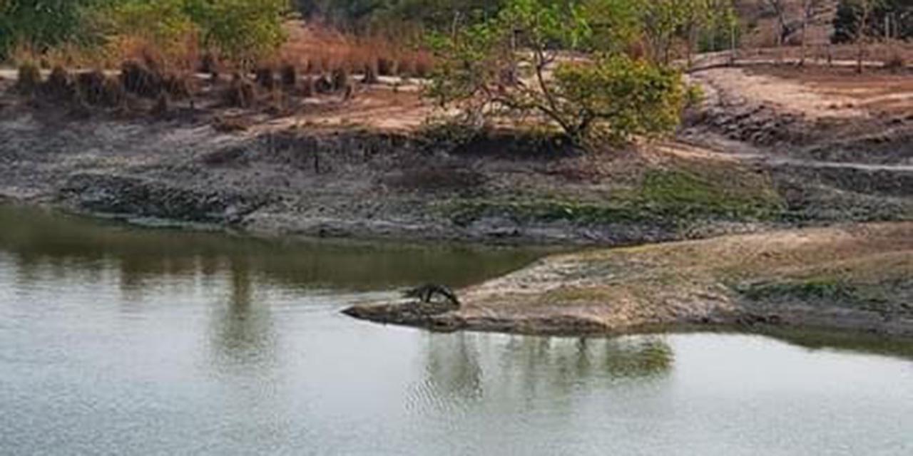 Reportan un peligroso cocodrilo en La Estancia   El Imparcial de Oaxaca