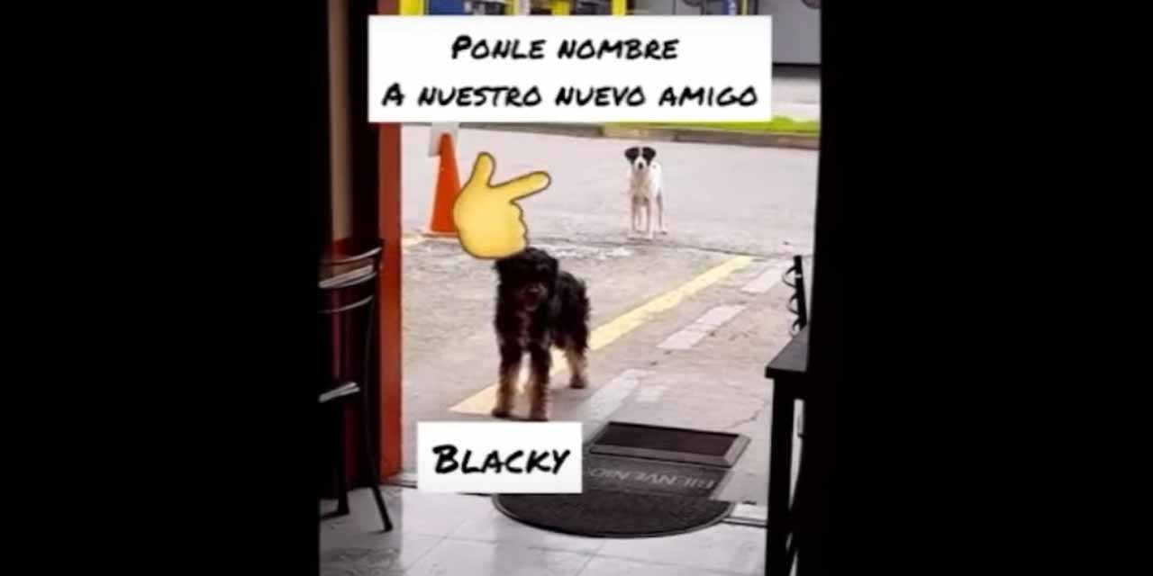 Video: Perrito callejero lleva a su amigo a restaurante donde les dan de comer | El Imparcial de Oaxaca