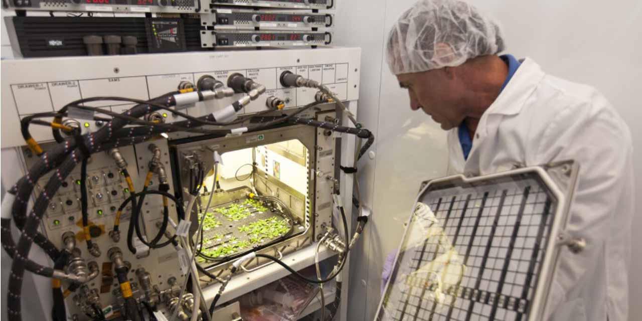 China hace crecer verduras en el espacio | El Imparcial de Oaxaca