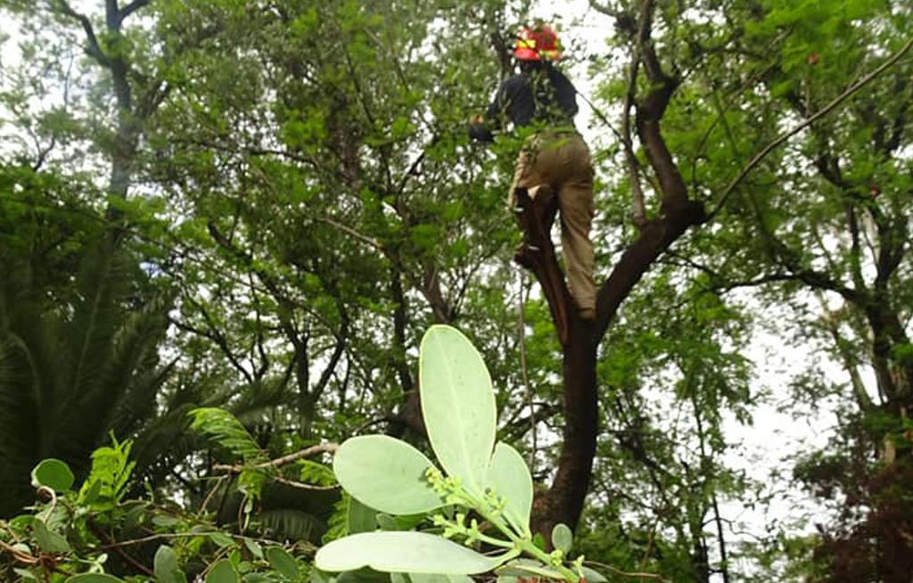 Ambientalistas advierten de riesgo para mil 500 árboles | El Imparcial de Oaxaca