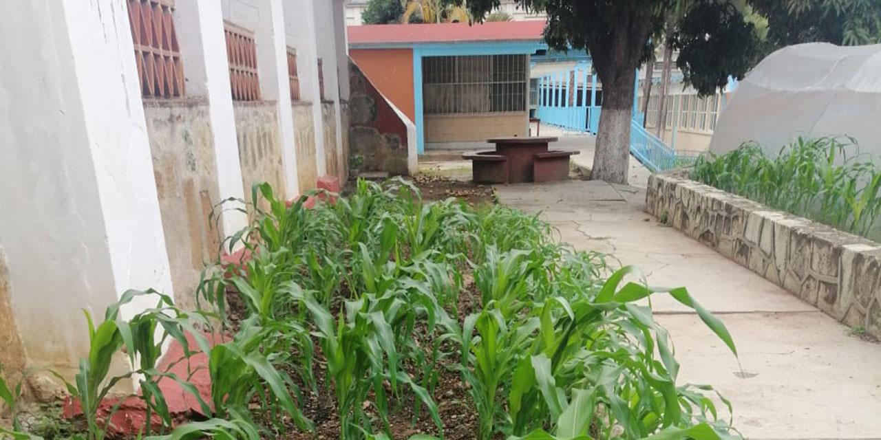 Impulsan invernadero escolar en medio de la pandemia | El Imparcial de Oaxaca