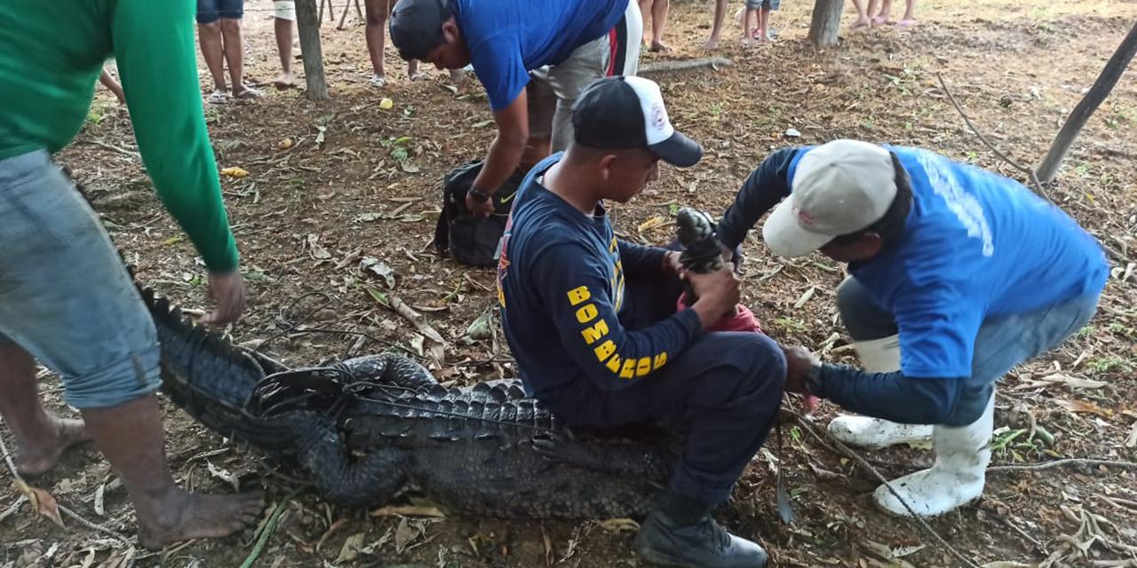 Extranjeras son atacadas por cocodrilo en la Costa | El Imparcial de Oaxaca