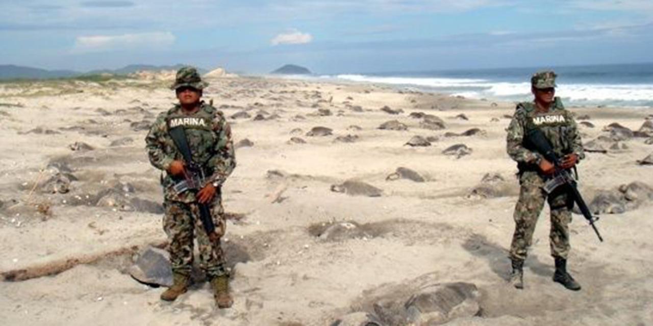 Decomisa Semar más de 91 mil huevos de tortuga en 21 años   El Imparcial de Oaxaca