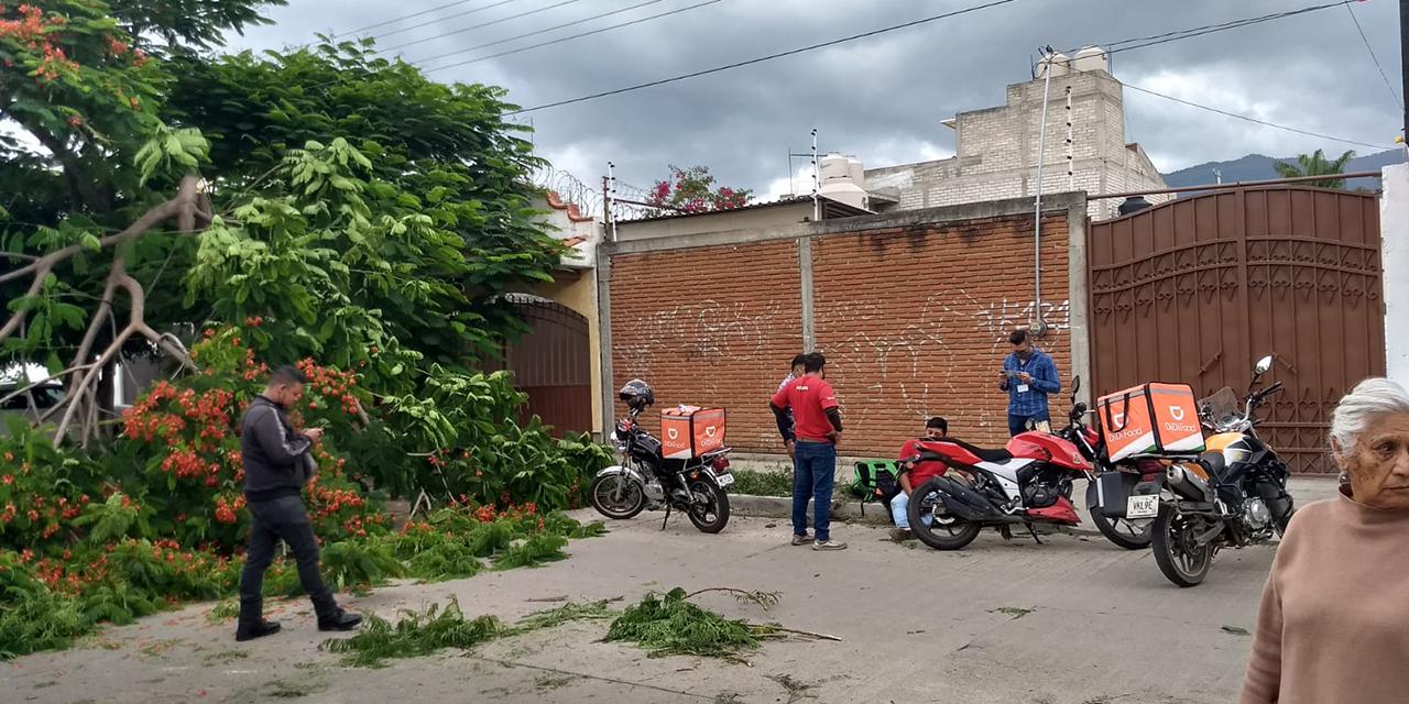 Rama de árbol golpea a repartidor   El Imparcial de Oaxaca