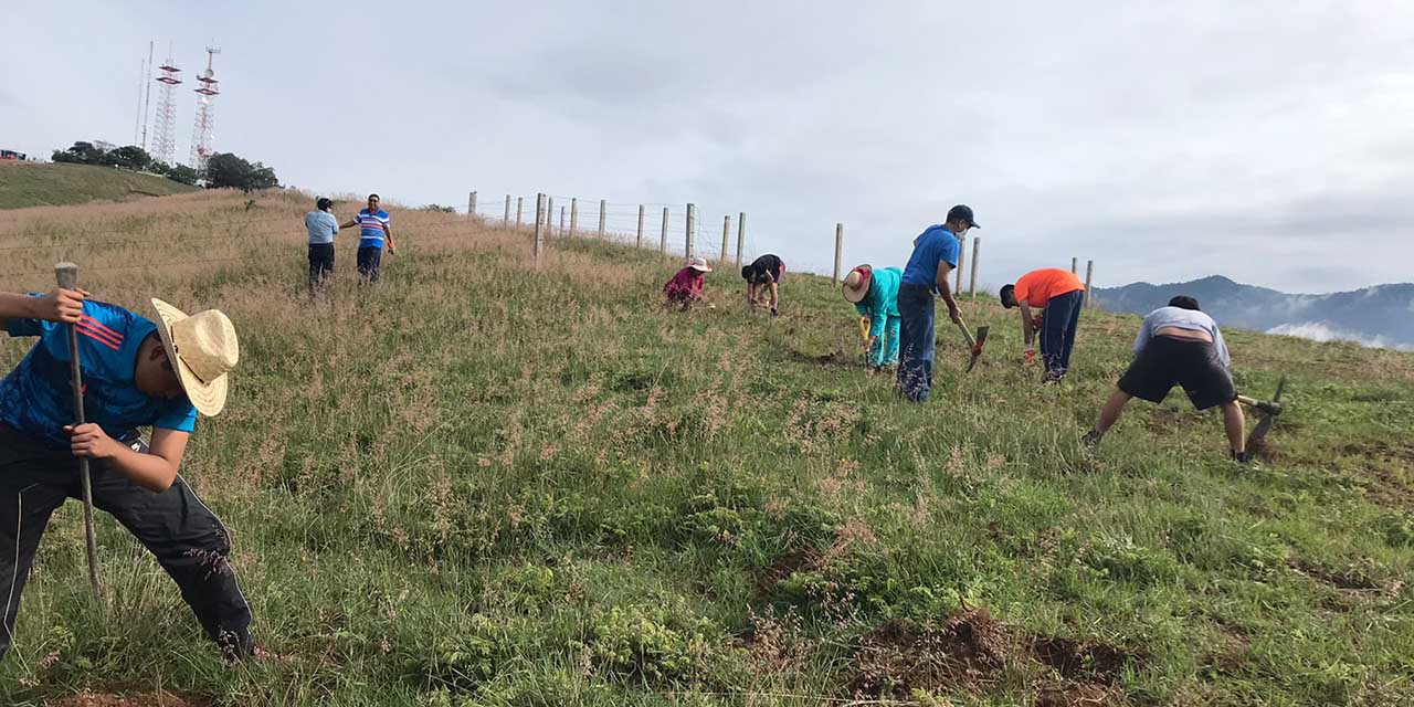 Impulsan reforestación del Cerro del Crestón | El Imparcial de Oaxaca