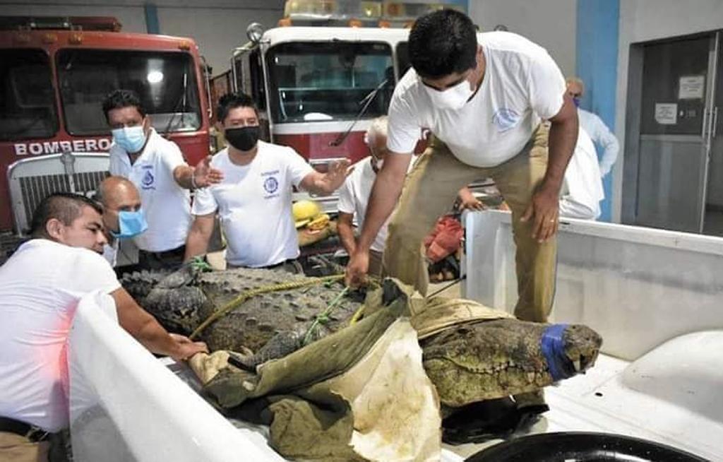 Liberan a Juancho, el cocodrilo que sería sacrificado por matar a una mujer | El Imparcial de Oaxaca