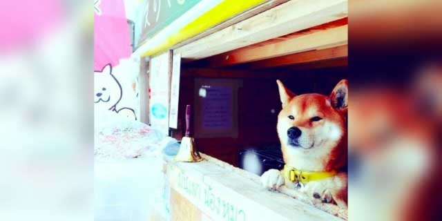 Perrito influencer que vendía camotes en Japón muere | El Imparcial de Oaxaca