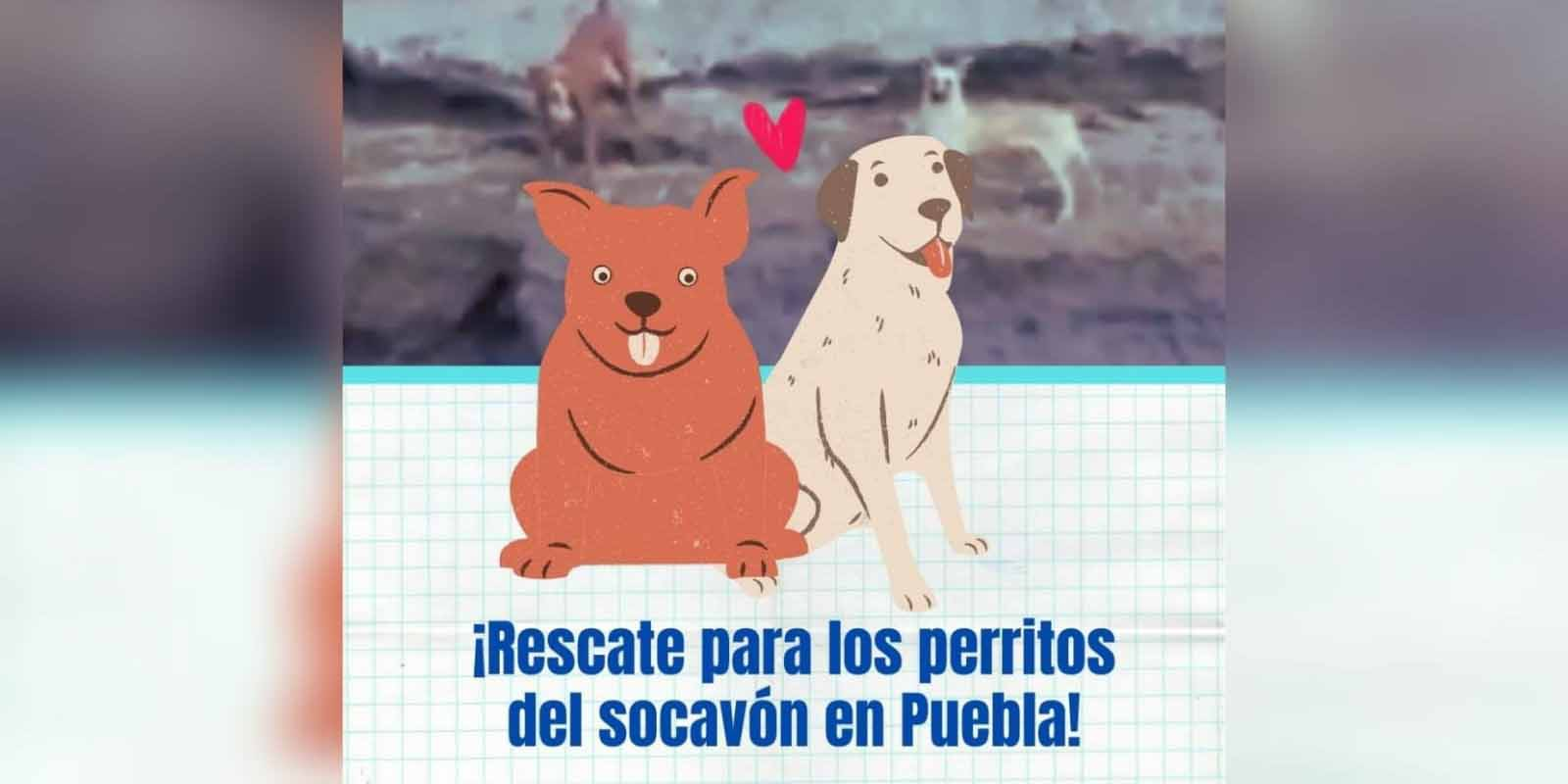Empieza el rescate de los perritos que cayeron al socavón en Puebla   El Imparcial de Oaxaca