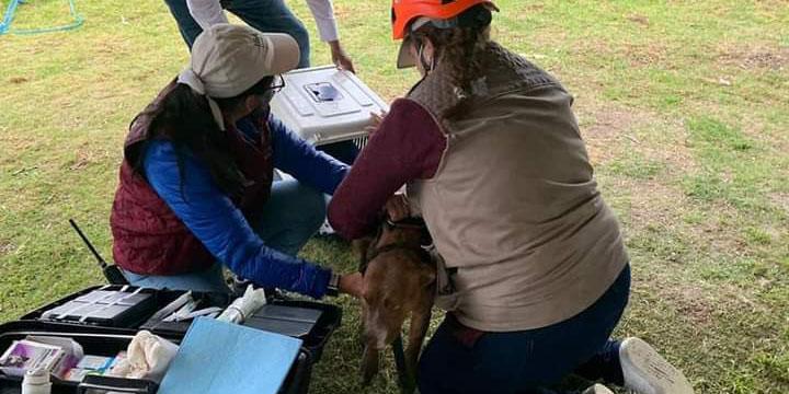 ¡Todos a salvo! En Puebla logran rescatar a los perritos que cayeron al socavón | El Imparcial de Oaxaca