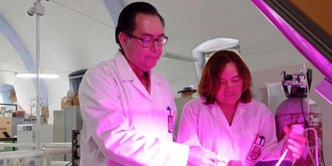 IPN estudia proteínas de alga spirulina que hacen mas fuerte el sistema inmune | El Imparcial de Oaxaca