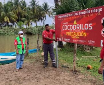 Alertan por presencia de cocodrilos