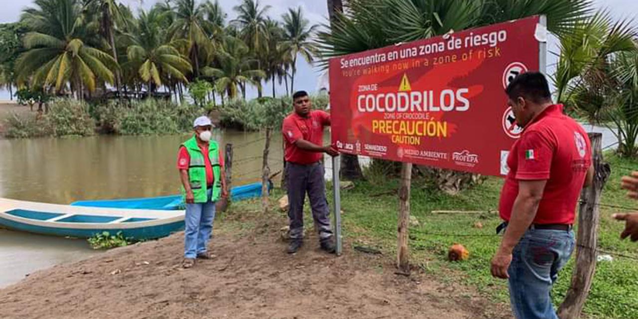 Alertan por presencia de cocodrilos   El Imparcial de Oaxaca