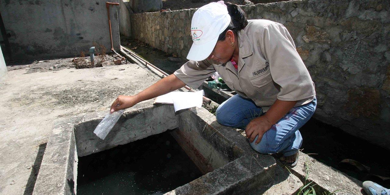 Oaxaca, con 42 casos de dengue 12 en una semana   El Imparcial de Oaxaca