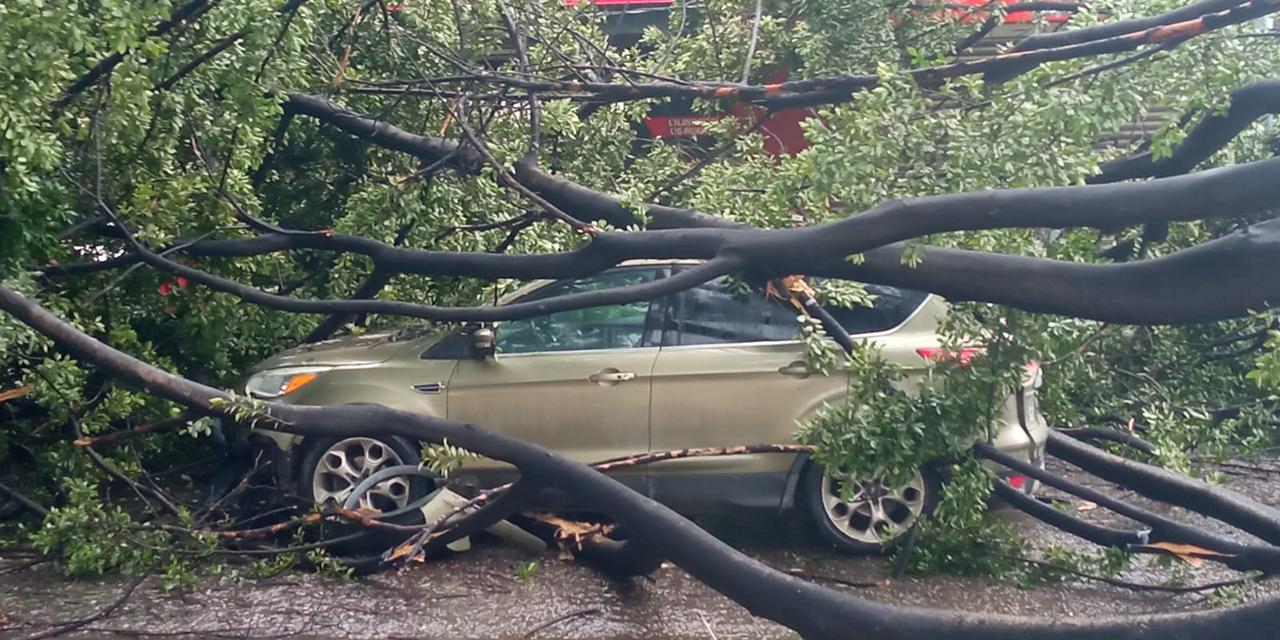 Árboles caídos y encharcamientos deja tormenta en Valles Centrales | El Imparcial de Oaxaca