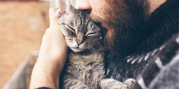 Científicos identifican al menos 3 tipos de relaciones de gatos con sus dueños | El Imparcial de Oaxaca