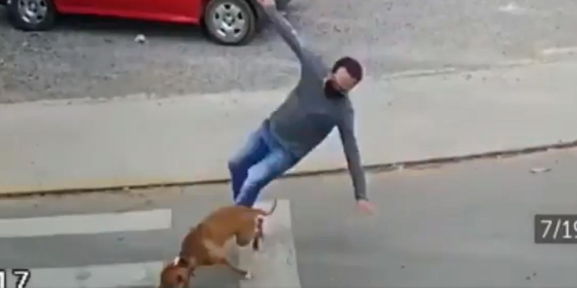 Video: Perrito atropella a joven que intentaba cruzar la calle y se hace viral | El Imparcial de Oaxaca