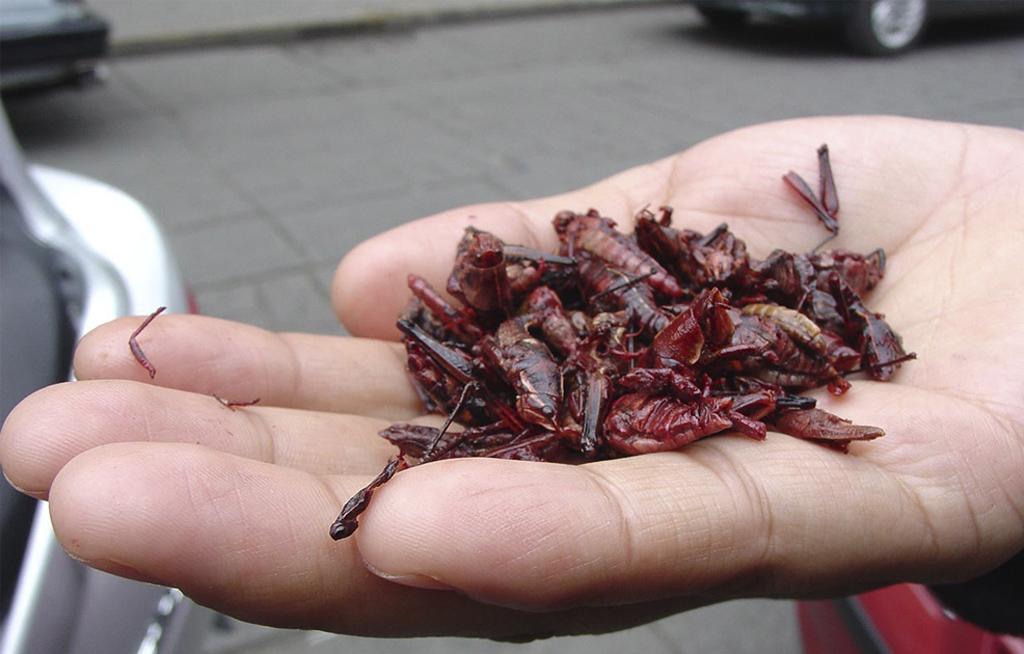 Elaboran alimentos con harinas de insectos   El Imparcial de Oaxaca