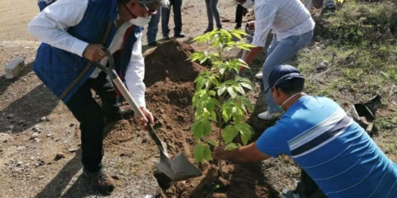 Planean reforestación en la región Mixteca   El Imparcial de Oaxaca