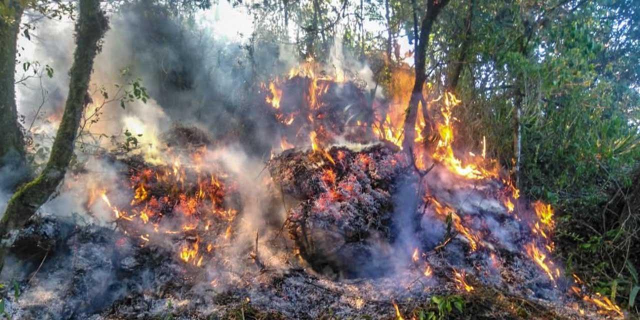 Afectación de superficie por incendios creció un 28%   El Imparcial de Oaxaca