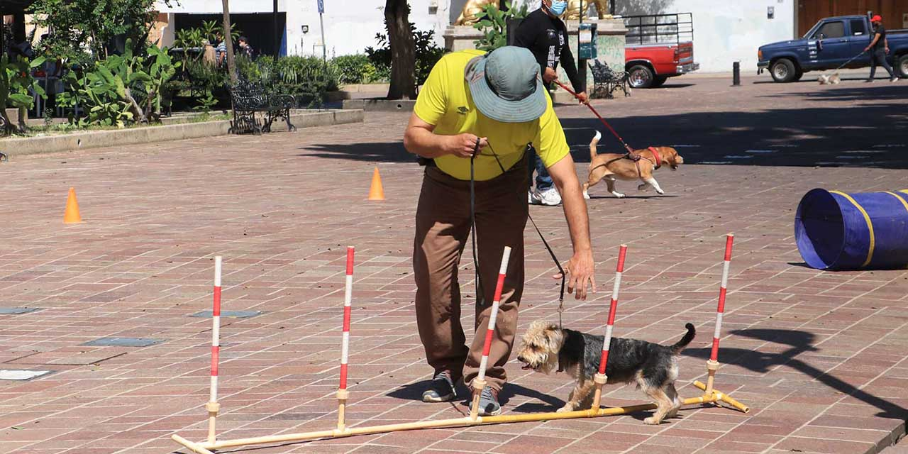 Con clases, promueven la adopción de perros | El Imparcial de Oaxaca