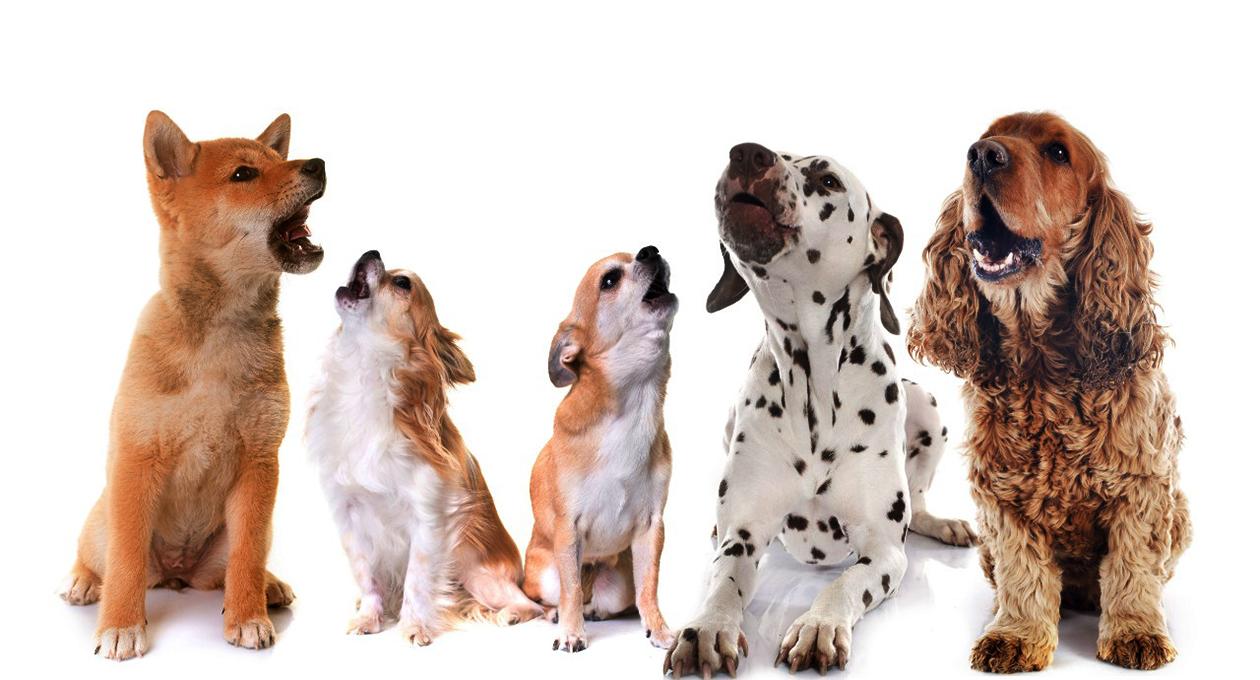 ¿Por qué aúllan los perros?   El Imparcial de Oaxaca