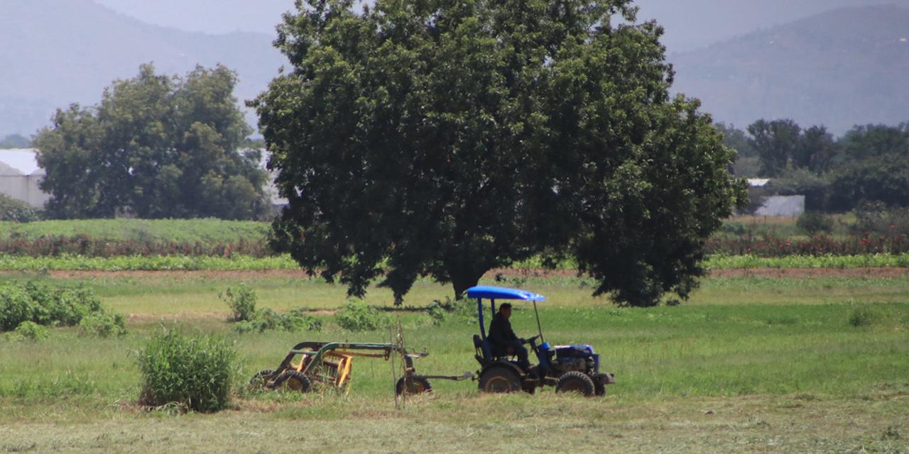 Labrar el campo con incertidumbre; se extinguen los trapiches de caña | El Imparcial de Oaxaca