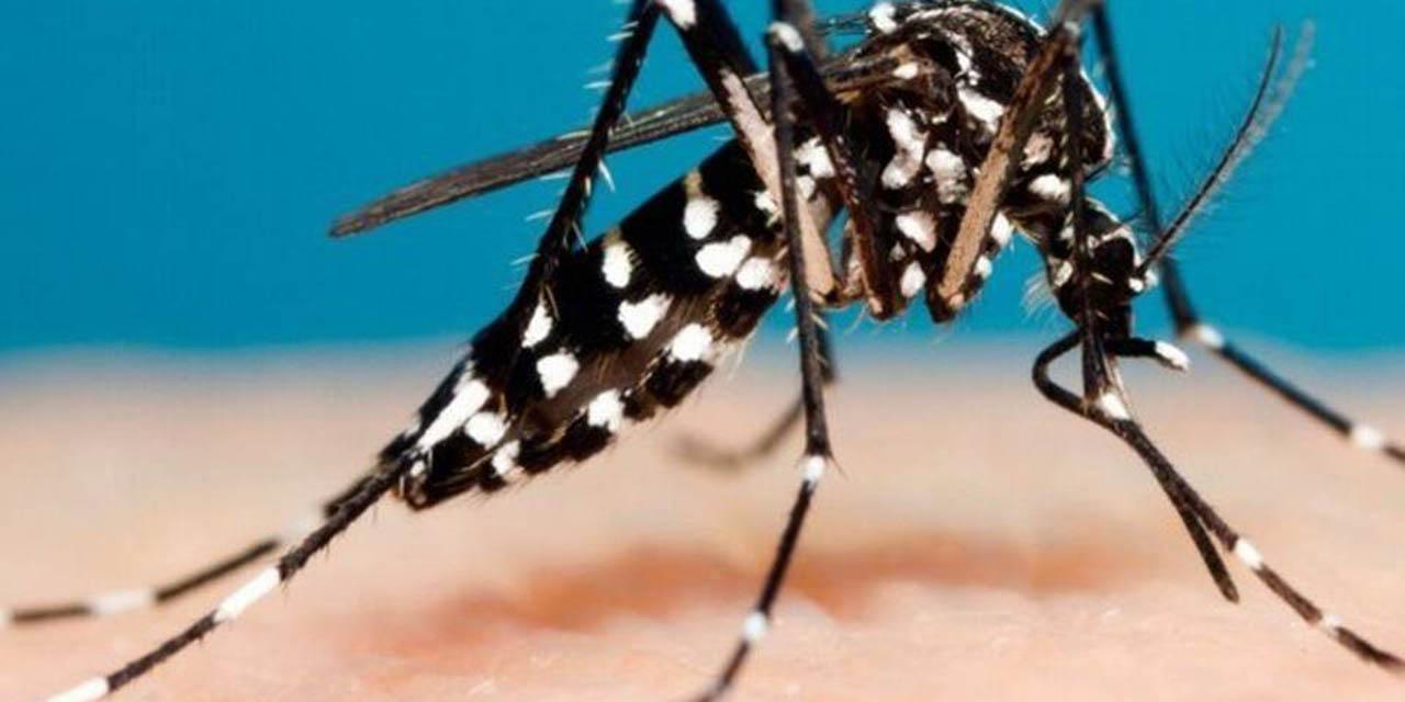 Confirman 2 casos de dengue en Huajuapan | El Imparcial de Oaxaca