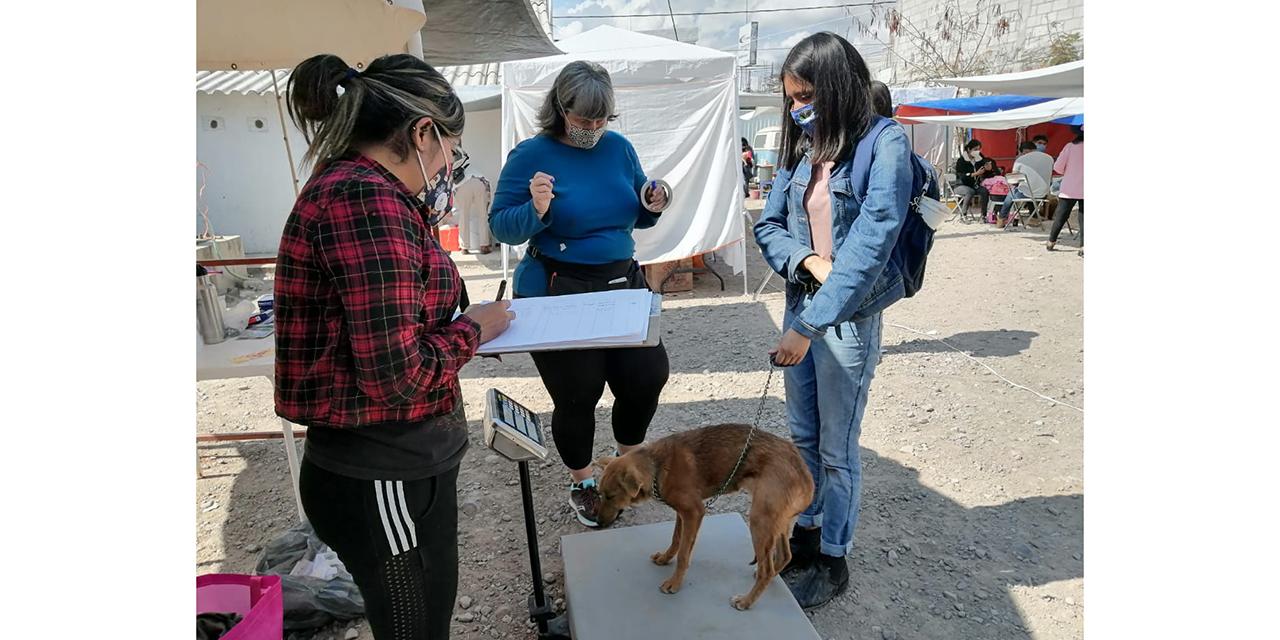 Promueven esterilización de mascotas en Huajuapan   El Imparcial de Oaxaca