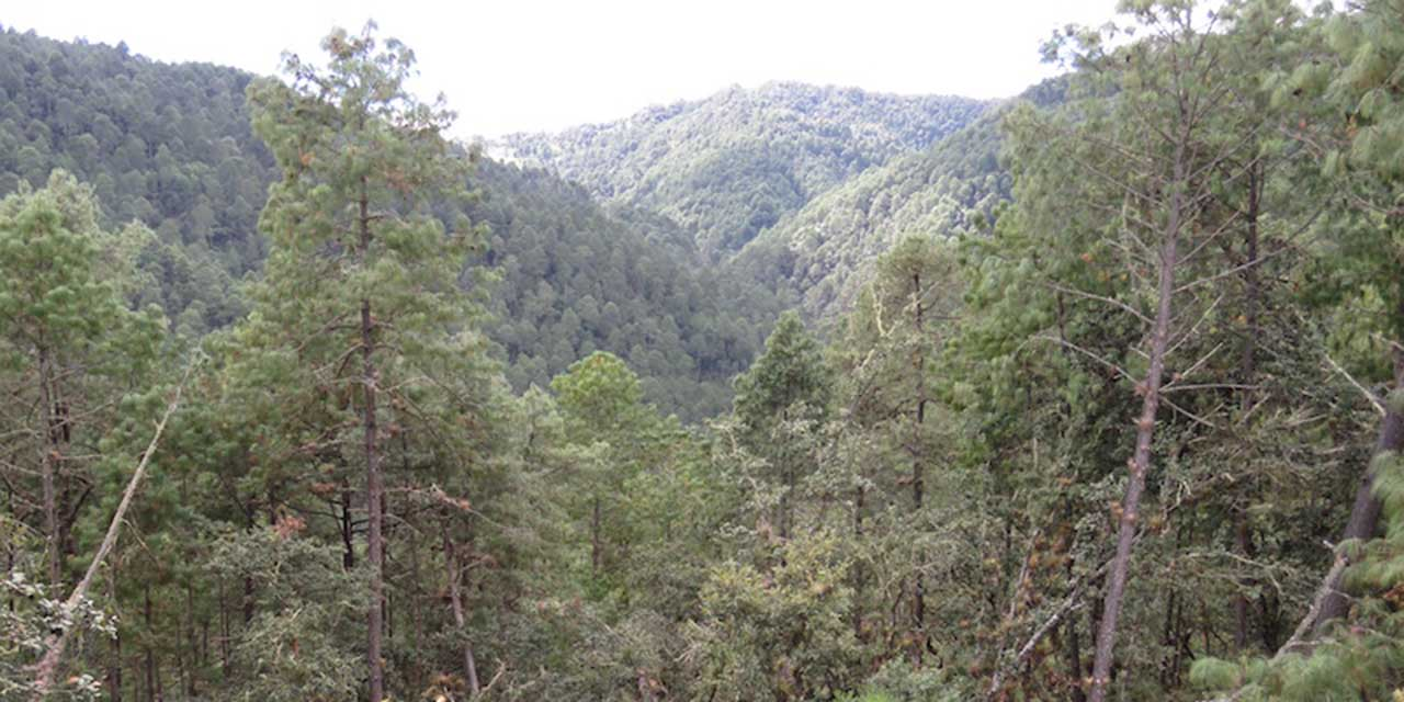 Explotación forestal, oxígeno para pueblos | El Imparcial de Oaxaca