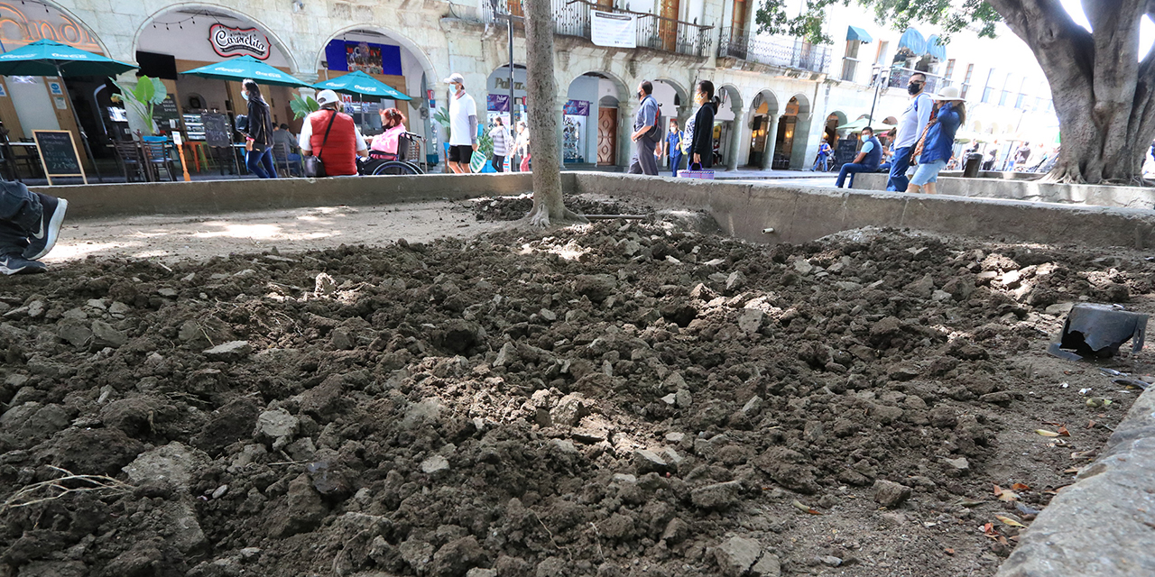 Perecen jardineras del zócalo por protestas de comerciantes   El Imparcial de Oaxaca