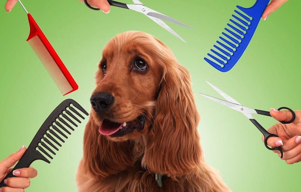 Cuida el pelo de tus mascotas | El Imparcial de Oaxaca