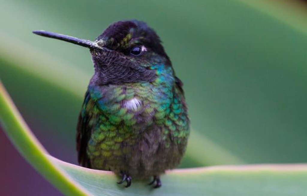 Sabías que los colibríes pueden vivir hasta 18 años | El Imparcial de Oaxaca