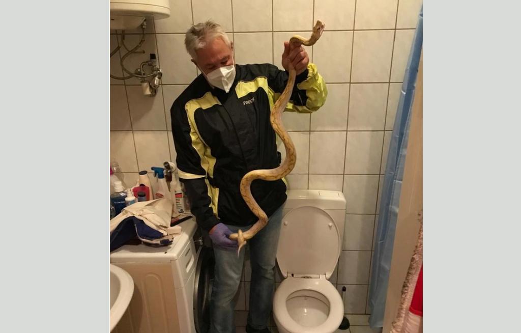 Pitón albino ataca los genitales de un hombre mientras hacía del baño | El Imparcial de Oaxaca