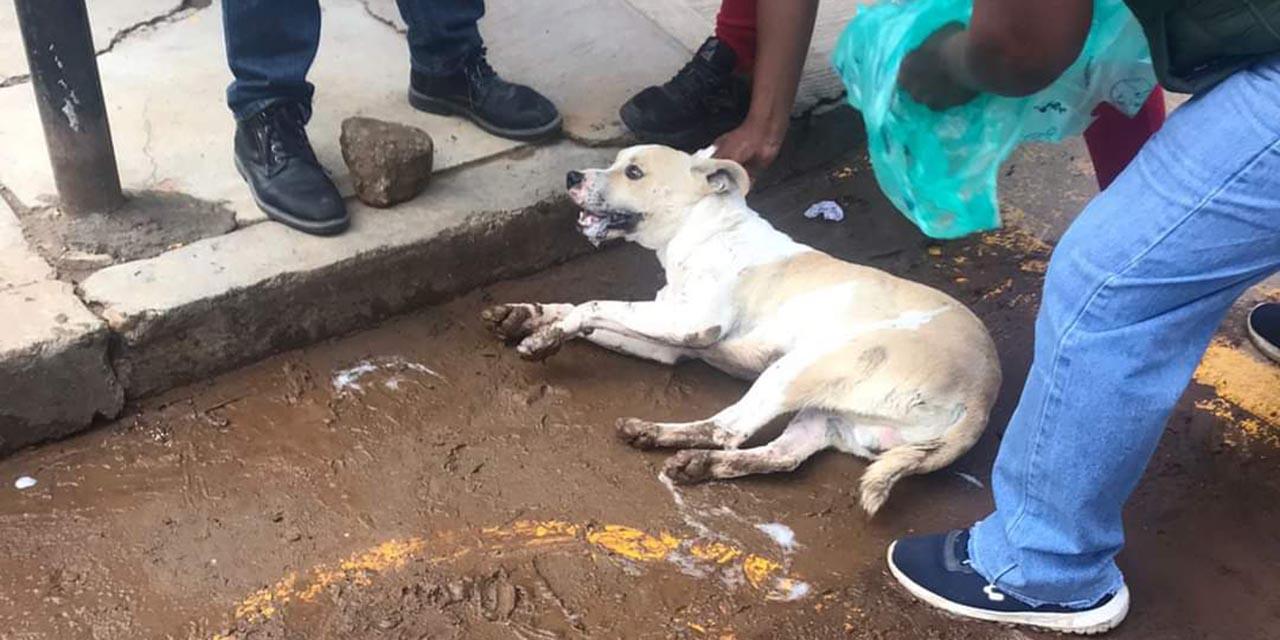 Pobladores de Zimatlán de Álvarez denuncian envenenamiento de perros callejeros   El Imparcial de Oaxaca