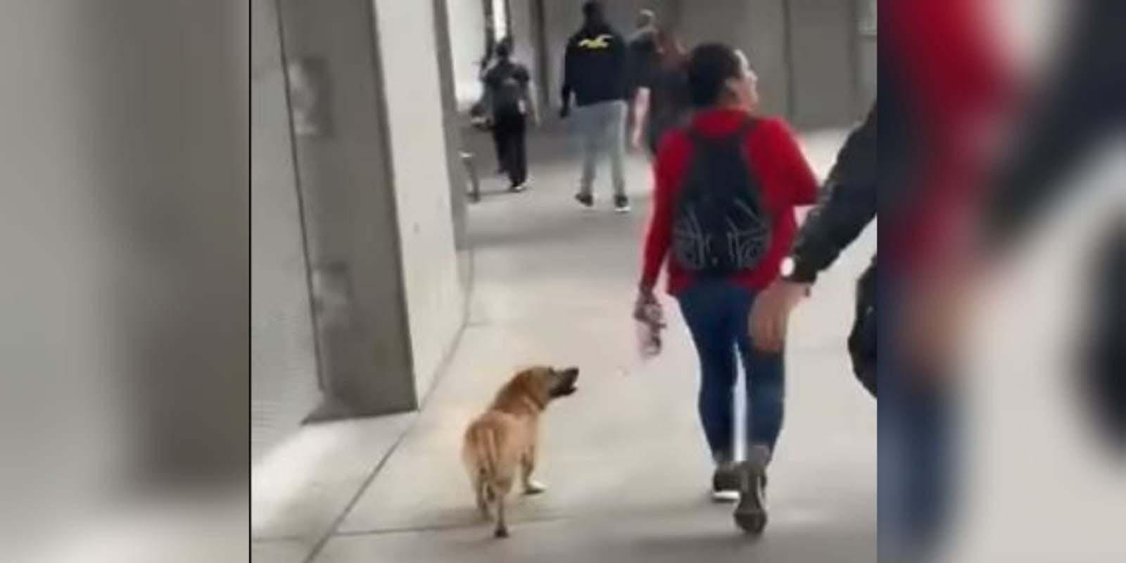 Perrito es captado cruzando la frontera con EU y se vuelve viral   El Imparcial de Oaxaca