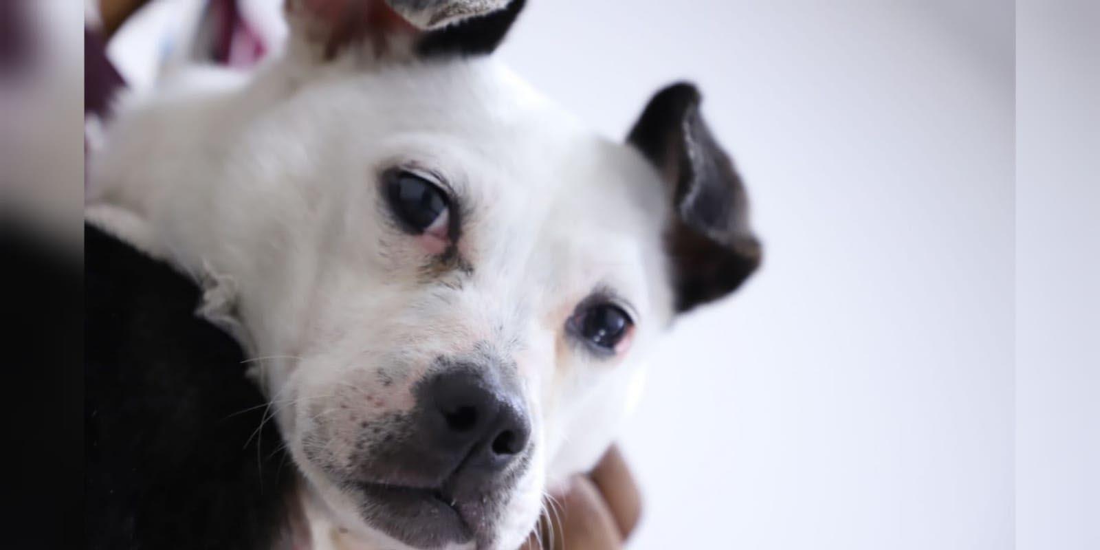 Adoptan a 'Lupita', perrita hallada con el cuello cortado en Ecatepec | El Imparcial de Oaxaca