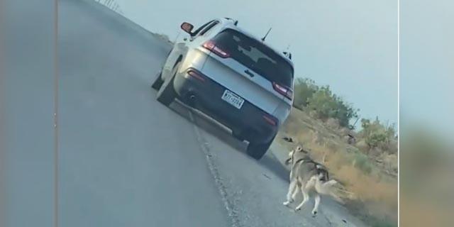 Hombre de 68 años es detenido después de haber abandonado a perrito a carretera | El Imparcial de Oaxaca