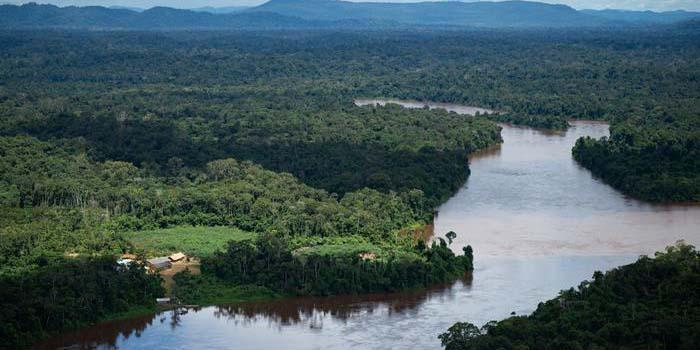 Científicos alertan que la Amazonia se transforma en emisor de CO2   El Imparcial de Oaxaca
