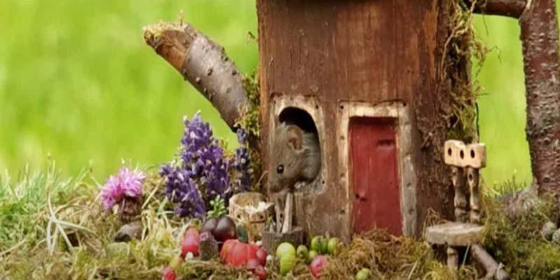 Fotógrafo construye casitas de hobbits a ratones que encontró en su jardín | El Imparcial de Oaxaca