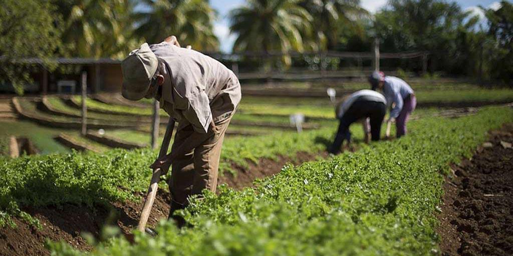 INEGI revela que la actividad económica de México creció un 0.6% durante mayo   El Imparcial de Oaxaca