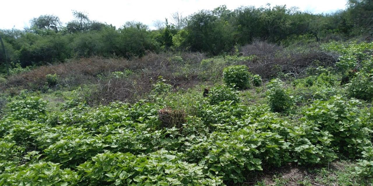 Despojan a adulta mayor de terreno en Santa Ana Zegache   El Imparcial de Oaxaca