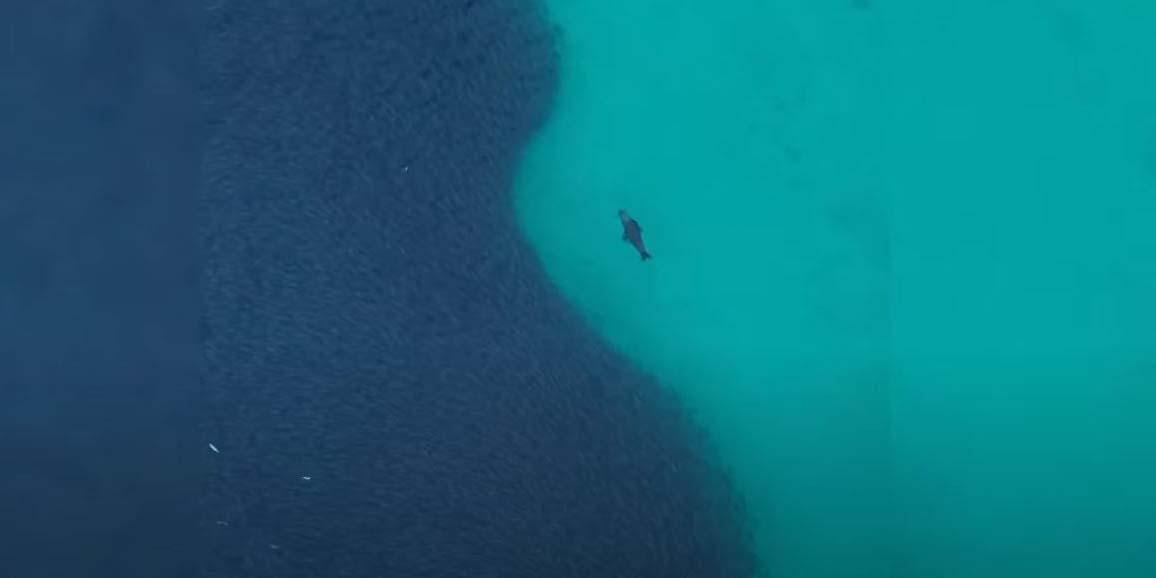 Con este movimiento hipnotizante una foca hambrienta intenta cazar su desayuno   El Imparcial de Oaxaca