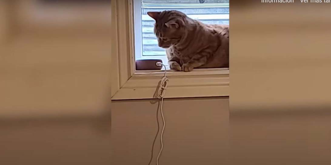 Viral: 'oye Alexa, ¿cómo suena un perro?': broma a gato se vuelve tendencia | El Imparcial de Oaxaca