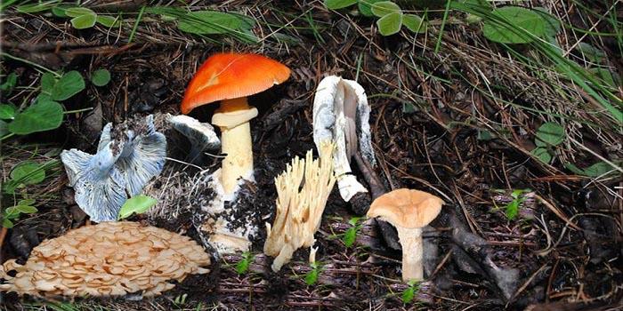 Oaxaca tiene más de 200 variedades de deliciosos hongos silvestres comestibles   El Imparcial de Oaxaca
